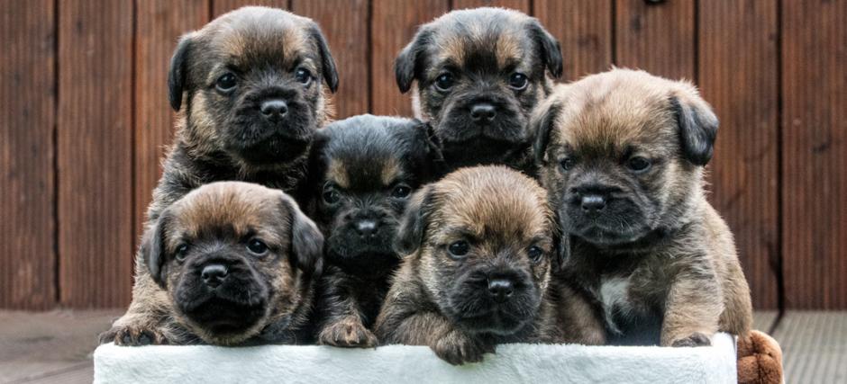 Polly Pocket S Border Terrier Kennel Der Familie Roschlak Aus